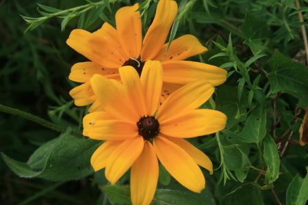 gele bloemen Stockfoto