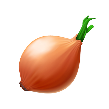 illustration of realistic onion on white color background