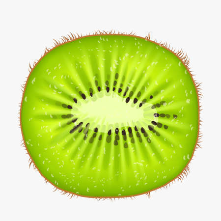 kiwi fruit front view on white back Иллюстрация