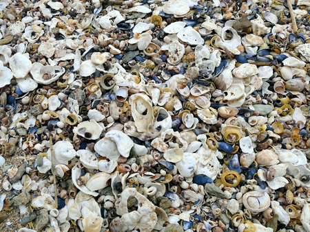 Natural sand, mussels shelss, oyster shells and other shells colorful background