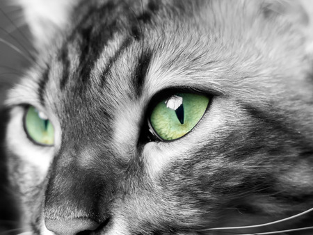 eyed: Green eyed monster in black and white