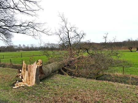 Damaged broken tree by hurricane wind after storm in meadow