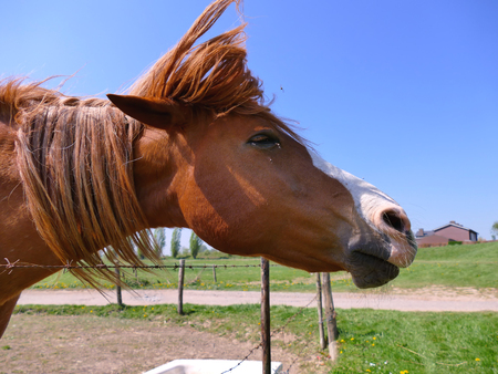 Horse shaking head to remove all the flies, action shot