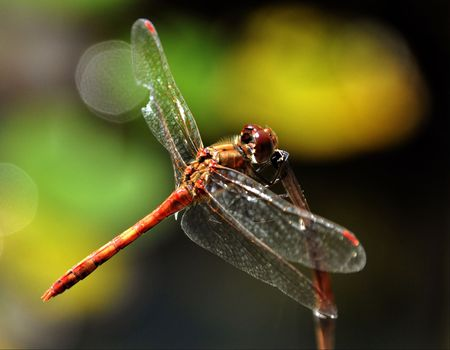 biotope: Dragon fly Stock Photo