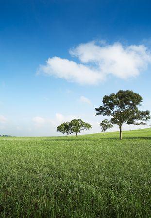 trees in an empty field Stock Photo - 2129079