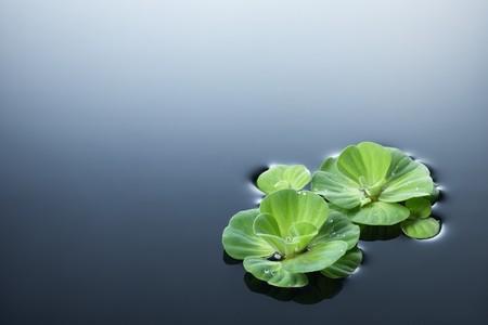 con las plantas verdes que flotan en el agua de rocío Foto de archivo - 4009162