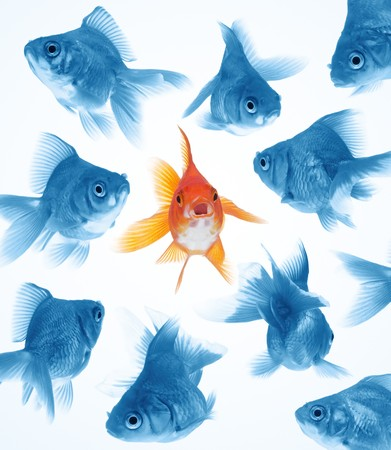 the difference: outstanding goldfish in middle, difference from others Stock Photo