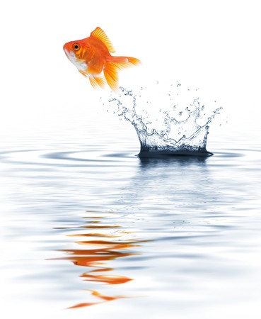 midair: goldfish jumping out from water creating splash Stock Photo