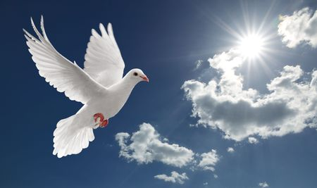 dove of peace: white dove flying on clear blue sky Stock Photo