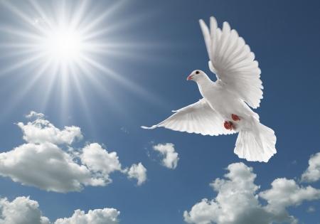 colomba della pace: colomba bianca di volo sul cielo blu chiaro