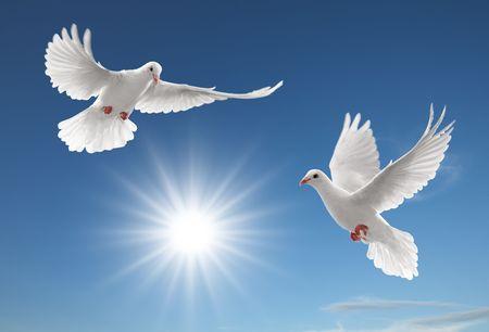 due colombe bianche di volo sul cielo blu chiaro Archivio Fotografico