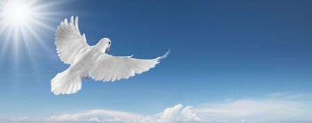 white dove: paloma blanca volando sobre cielo azul Foto de archivo