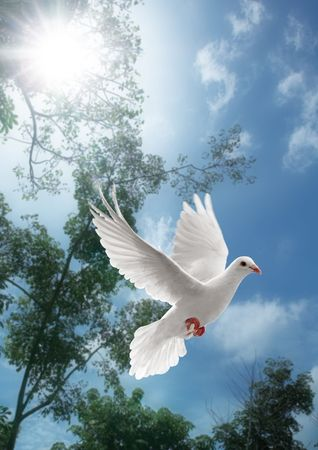 white dove flying on sky with trees behind