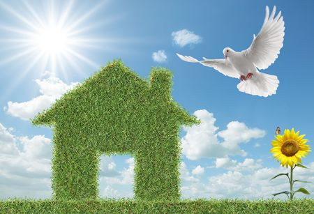 white dove flying towards green grass house Stock Photo - 4621964