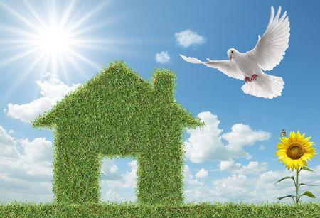 white dove flying towards green grass house Stock Photo - 4621964