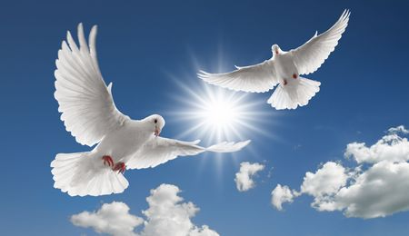 white dove: two doves flying with spread wings on sky