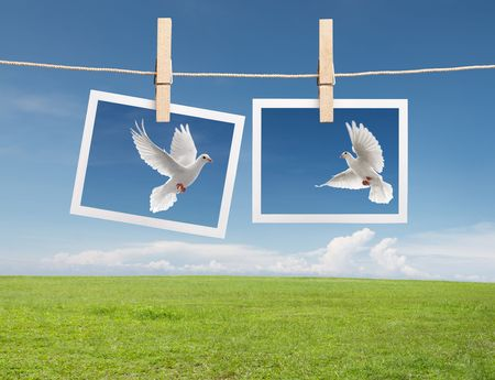 two photos of dove hanging on clothesline photo