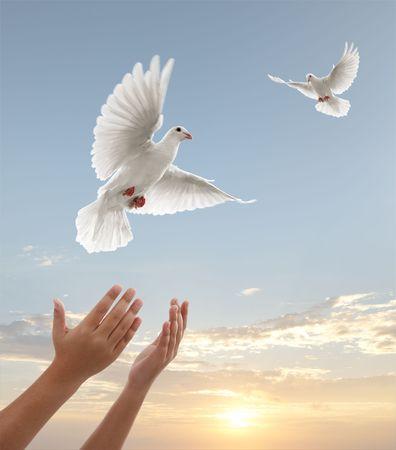 colomba della pace: paio di mani rilasciando colombe bianche durante il tramonto Archivio Fotografico