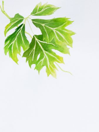 watercolor painting of leaves with copy space photo