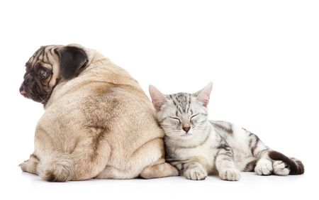 buddies: dog and cat together on white background