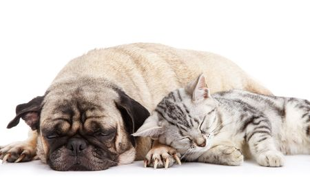 dog and cat taking a nap together photo