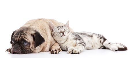 cat sleeping: cat taking a nap leaning to the dog Stock Photo