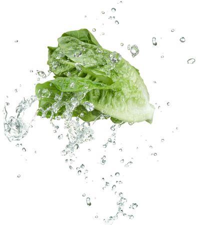 lechuga: hortalizas frescas con salpicaduras de agua sobre fondo blanco
