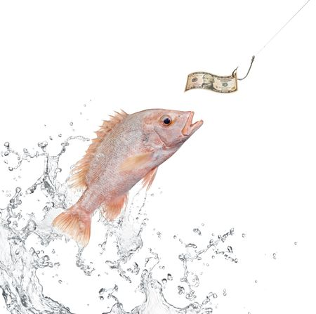 fish jumping out from water hunting for money photo