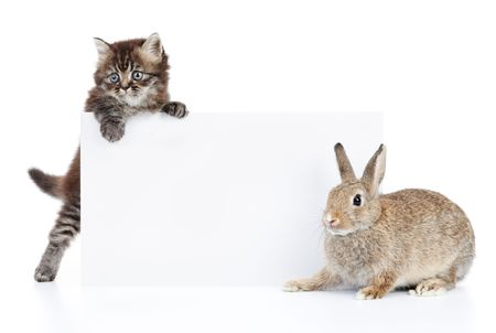 cat and rabbit with blank white cardboard photo