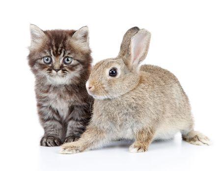 Katze und Kaninchen, die isoliert auf weißem Hintergrund