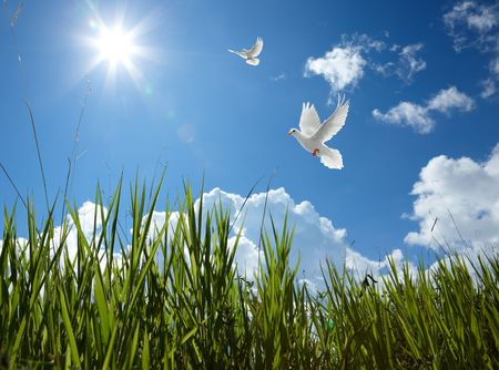 paloma: esc�nica del cielo con palomas y la hierba Foto de archivo