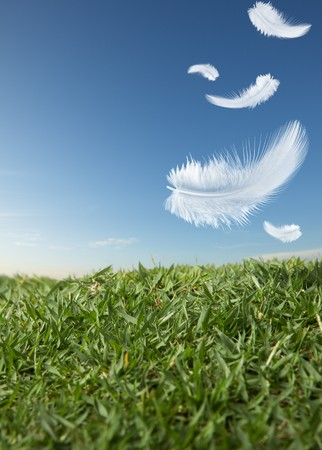 soft object: white feathers falling down on green grass Stock Photo
