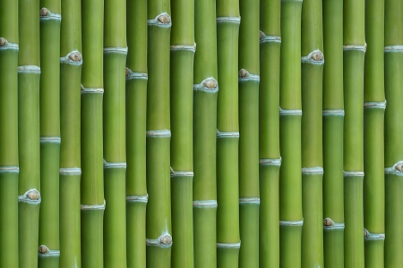 bamboo background: bamboo sticks in a row as background Stock Photo