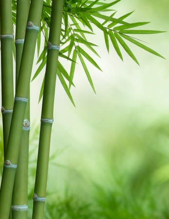 bunch of bamboo with leaves with copy space photo
