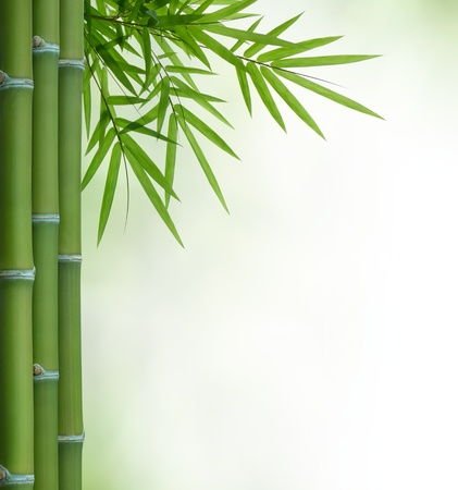 bunch of bamboo with leaves with copy space