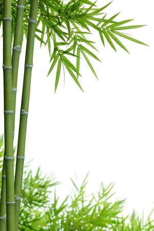bamboe met bladeren op wit met een kopie ruimte Stockfoto
