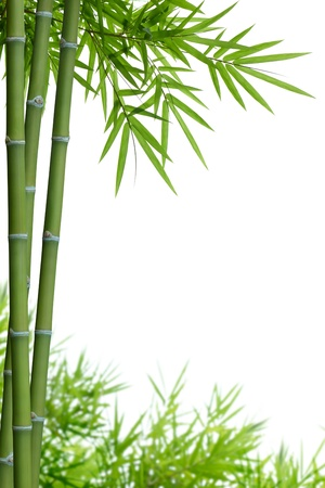 bamboo: bamboo with leaves on white with copy space Stock Photo