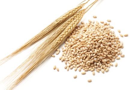 pearl barley: barley  hordeum  with pearl barley isolated on white