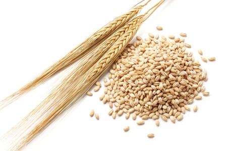 cebada: cebada Hordeum con cebada perla aislado en blanco