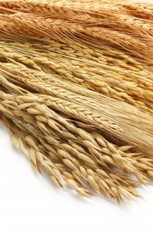 paddy: various type of cereals including oat, barley, paddy and wheat as background Stock Photo