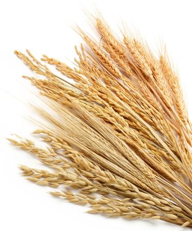 avena: varios tipos de cereales como el trigo Triticum, Oryza arroz, Hordeum cebada y avena de la avena Foto de archivo