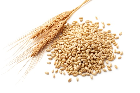 wheat ears  triticum  and wheat kernels isolated on white Stock Photo