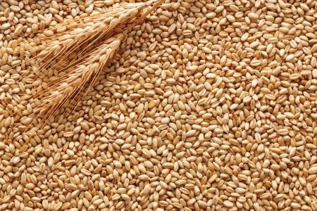wheat kernel: wheat ears on wheat kernels as background Stock Photo