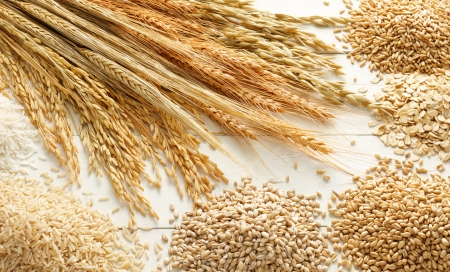 various type of cereals and grains against white wood background photo