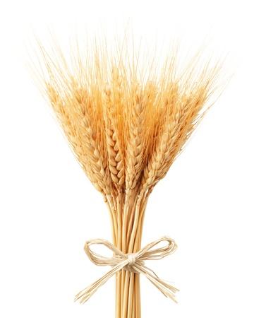 cultivo de trigo: manojo de espigas de trigo aislado en blanco Foto de archivo