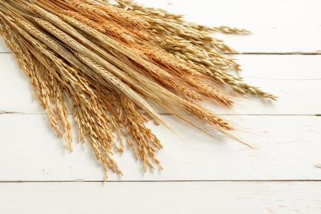 rice paddy: various type of cereal plants against white wood background