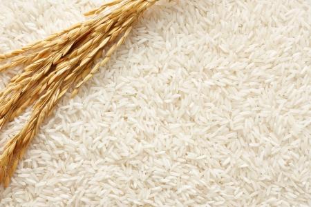 arroz blanco: sembrar arroz en el arroz blanco como fondo Foto de archivo