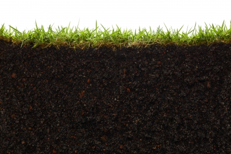 cross section of grass and soil against white background Stock Photo