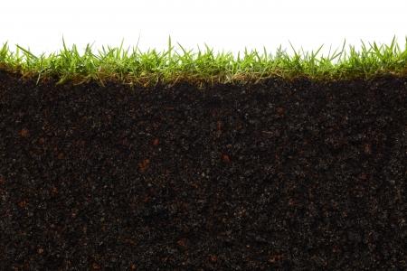 Querschnitt durch Gras und Boden vor weißem Hintergrund
