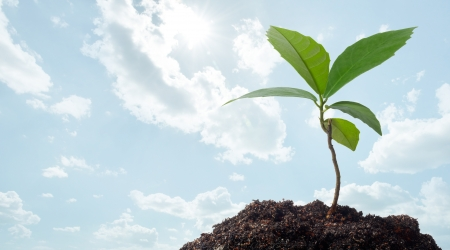 growth of a new plant against clear blue sky Stock Photo